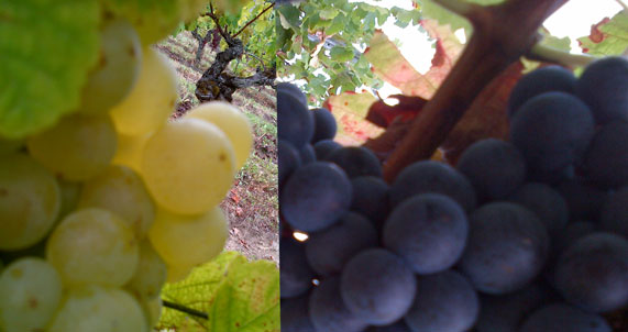 Plaquette Vins 2015
