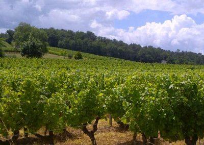 vignes-vignobles-teillet-2