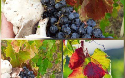 Balade dans les vignes aux Vignobles Teillet en Gironde